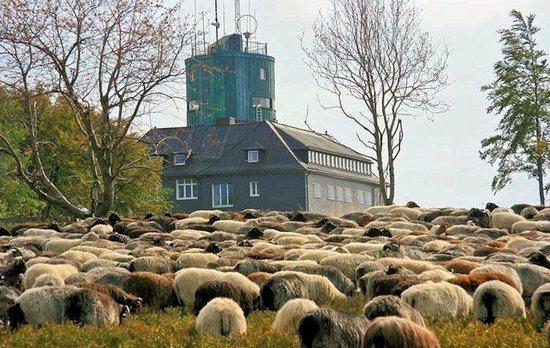 Berghotel Lenneplätze Winterberg: Kahler asten