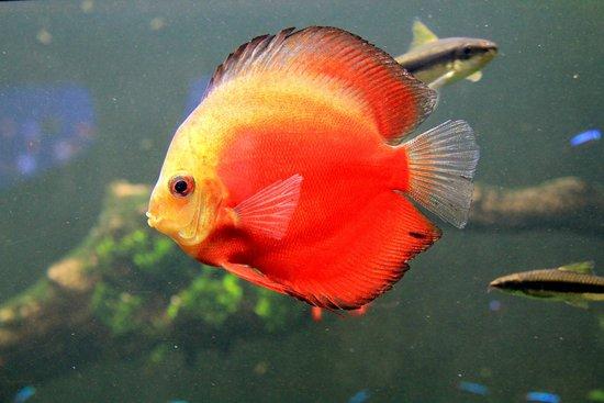 Colourful Fish Picture Of Waikiki Aquarium Honolulu