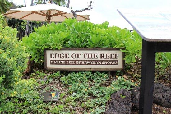 Waikiki Aquarium : Outdoor exhibits
