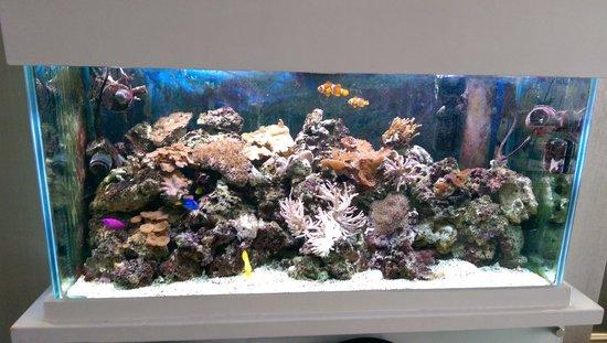 The Kenley: Nemo cast
