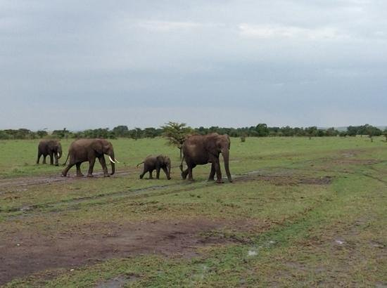 Olare Mara Kempinski Masai Mara: семья слонов