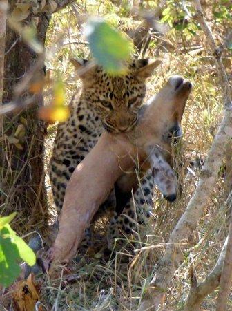 Serondella Game Lodge: Leopard Kill