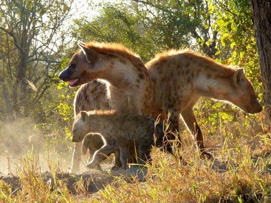 Serondella Game Lodge: Hyena Den
