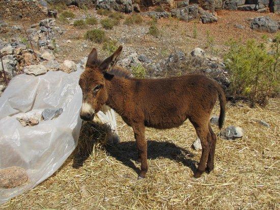 Krana Apartments : Baby donkey