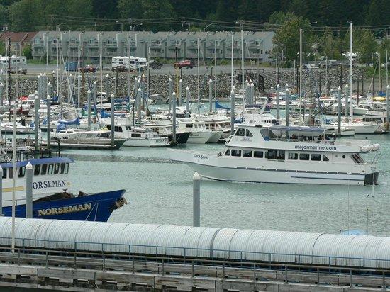 Seward Boat Harbor : Seward Harbor from aboard cruise ship