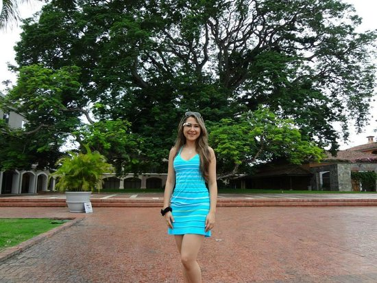 JW Marriott Panama Golf & Beach Resort: Majestuoso árbol