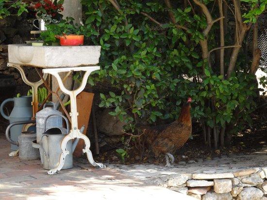 La Masure : Die Eierlieferantin schaut vorbei, ob's schmeckt