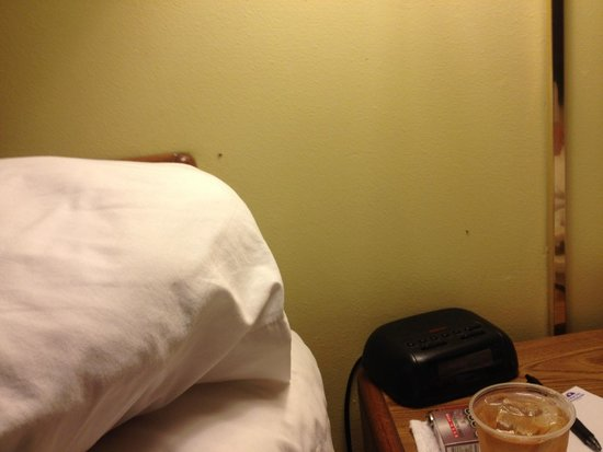 Americas Best Value Inn - Satellite Beach / Melbourne: Bugs on wall between beds