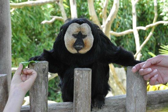 Zoo La Boissière du Doré : .