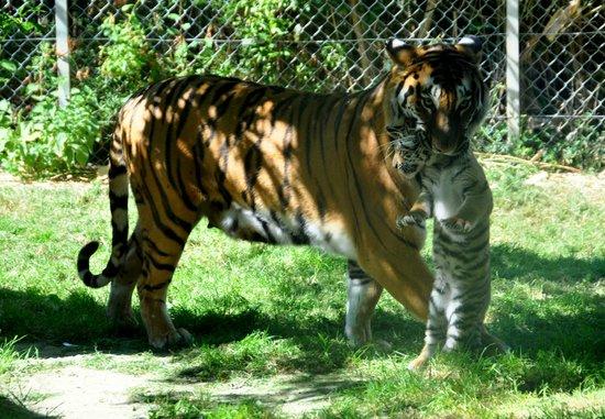 Zoo La Boissière du Doré: .