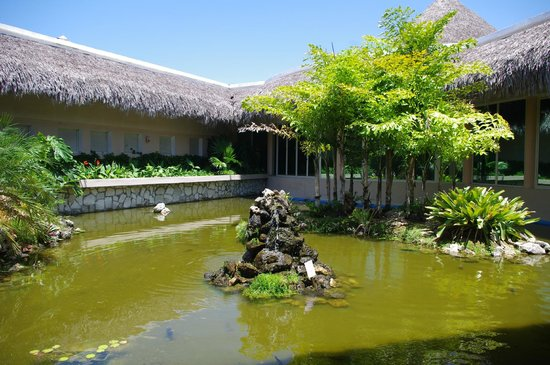 Iberostar Varadero : Pond with turtles and fish!