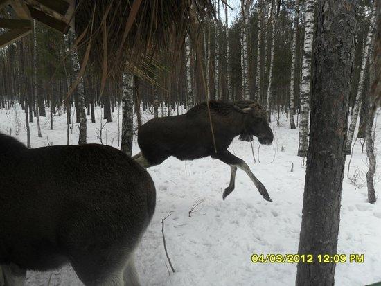 Berezina Biosphere Reserve: вольеры