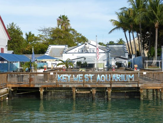 Key West Aquarium Picture Of Key West Aquarium Key West Tripadvisor