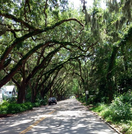 St. Augustine Gold Tours: oak canopy near fountain of youth entrance