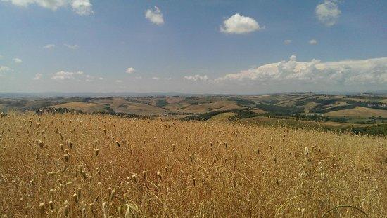 Crete Senesi : grain field