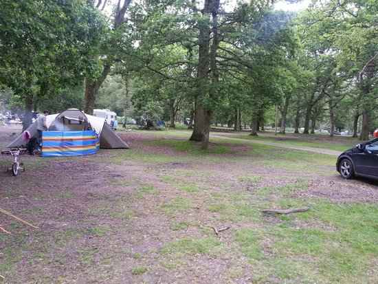 Hollands Wood Campsite: Space