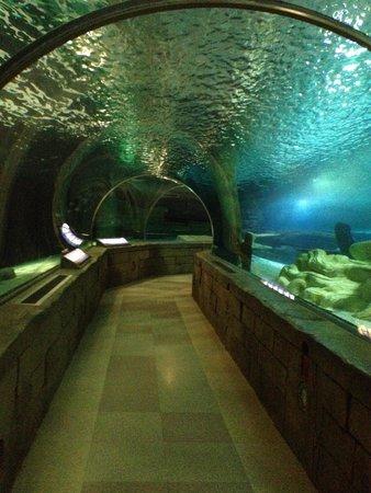 Animal Exhibits Picture Of Sea Life Minnesota