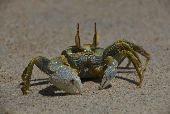 Daniella's Bungalows: Crab portret