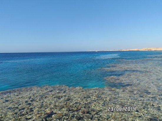 Continental Garden Reef Resort: риф