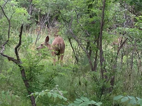 Raton, NM: Deer in the little wooded area behind site 5!