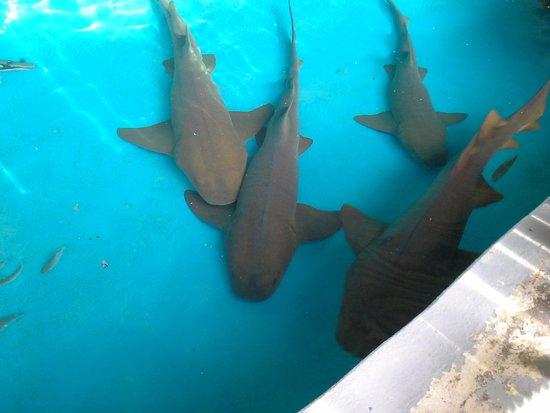 Aracaju Aquarium : Tubarões