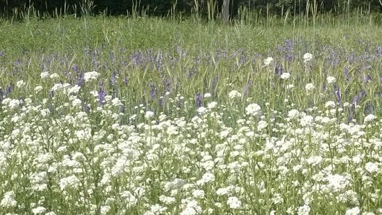 Whiteley Creek Homestead: Lovely wild flowers add to to the special place