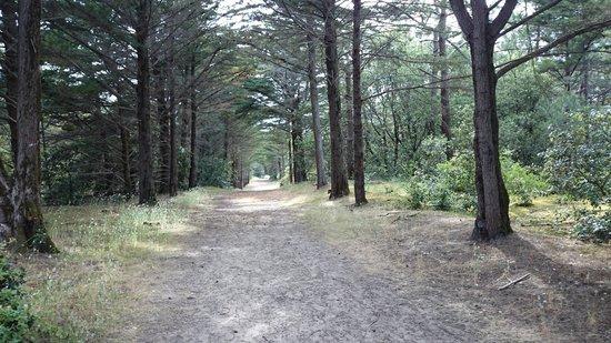 Camping La Forêt : Weg zum Strand