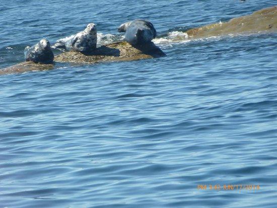 Bird Island Boat Tour: Grey Seals