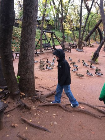 L'Auberge de Sedona: duck feeding