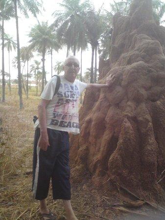 Badala Park: Termite hill at the back of Badala.
