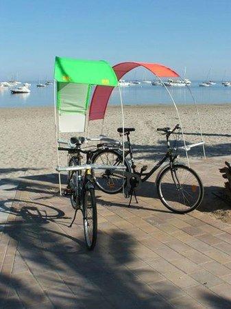 Bay Bikes: baybike sun shades