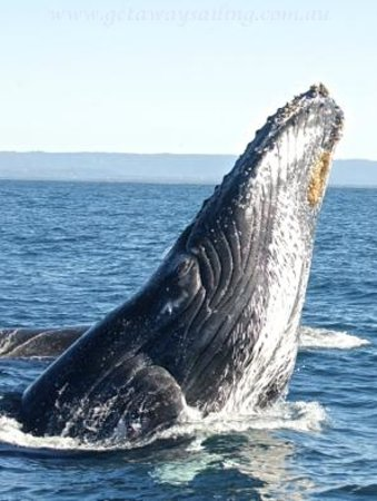 Getaway Sailing on the Gold Coast: Private Gold Coast Whale Watching tours