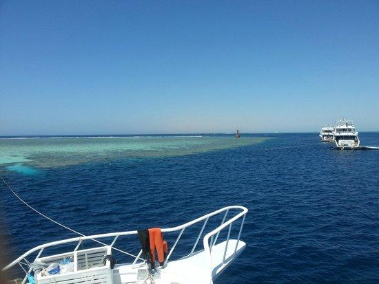 Ocean College Dive Centre : Jackson Reef
