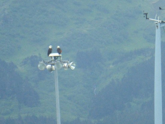 Chinooks Waterfront Restaurant: Bald eagles in Seward harbor