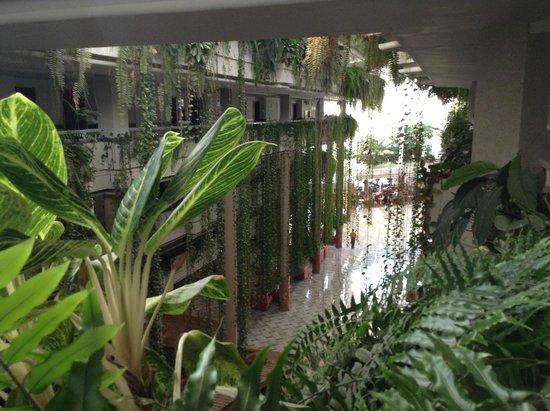 Be Live Experience Playa La Arena : jardines colgantes