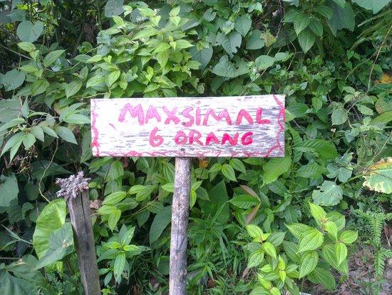 Expedition Jungle : Hinweis an der Hängebrücke in Tankahan