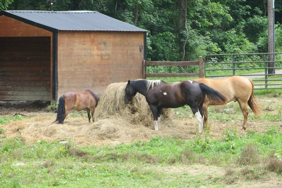 Whispering Woods Riding Stable: A pony and mare eating lunch