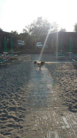Holiday Village Florenz: I cani si trovano a loro agio.