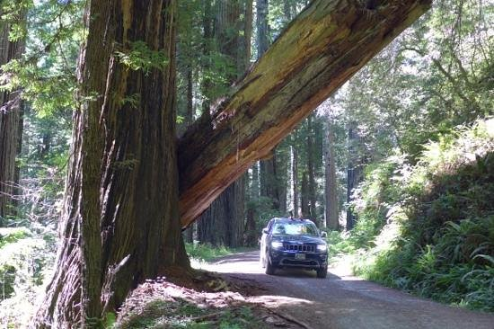 Redwood National Park: This is real.