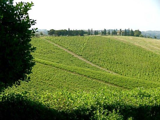 Hotel Belvedere Di San Leonino: adjoining vineyard