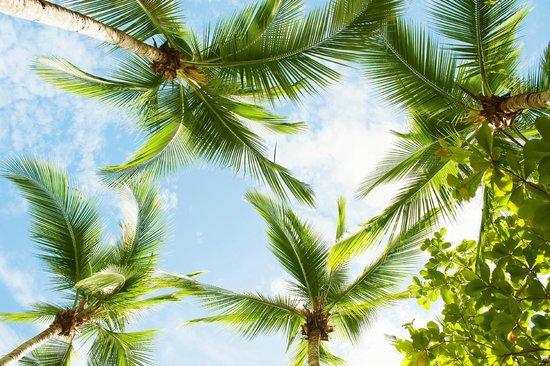 Karahe Beach Hotel: Naturaleza