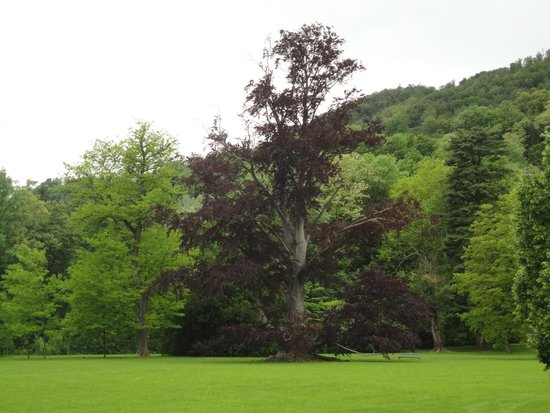 Schloss Eggenberg: Jardim aconchegante