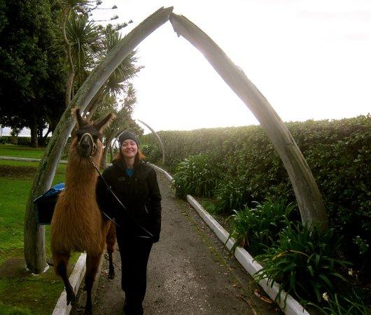 Kaikoura Llama Trekking: Walking along with Pete my wife is so happy!  Pretty cool walk through replica whale bones.