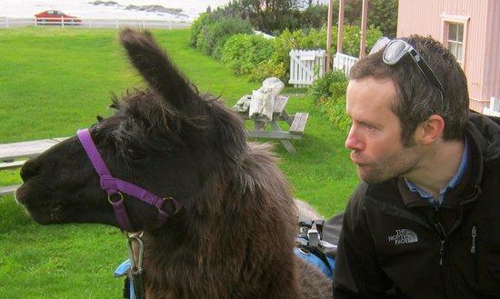 "Kaikoura Llama Trekking: Trying to imitate Legend's quick ""was that a predator"" glance."