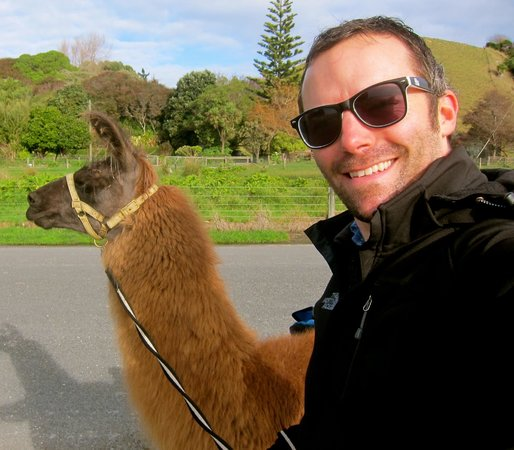 Kaikoura Llama Trekking: We swapped up halfway and I took Pete for a stroll.