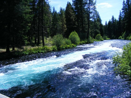 Metolius River: Another section of the Metolius, by the fish hatchery