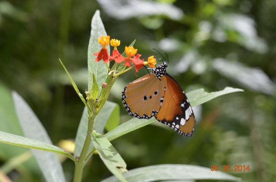 The Butterfly Farm (La Ferme des Papillons): Super cool pictures to get