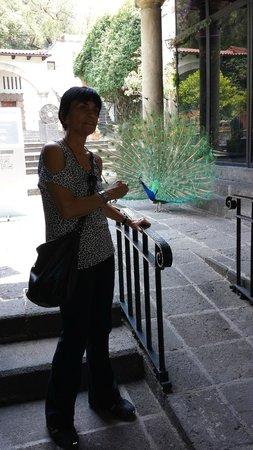 Museo Dolores Olmedo Patino: recepção de luxo na entrada do museu!