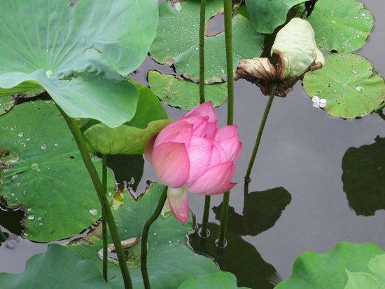 Ueno Park pond