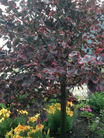 The Lakehouse Inn: Pretty trees